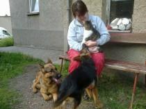 Ulf liegt entspannt neben Kater Leon, der auf Frauchen´s Schoß sitzt. Zorana (4Monate) würde ganz gern mit Leon spielen. Leon ist ein hundeerfahrener und sehr entspannter Kater.